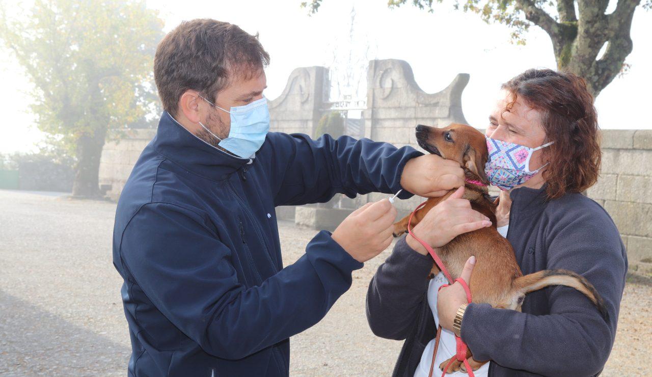 Campanha de Vacinação contra raiva em Baião abrangeu 350 cães