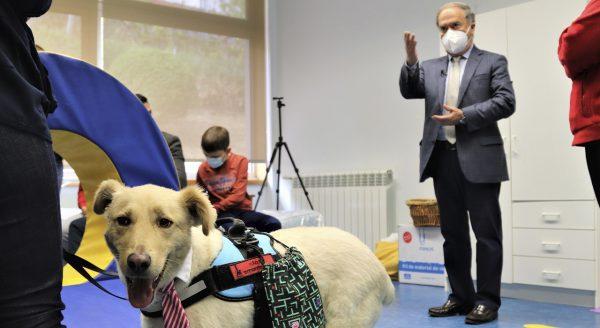 Cães interagem com alunos com Autismo