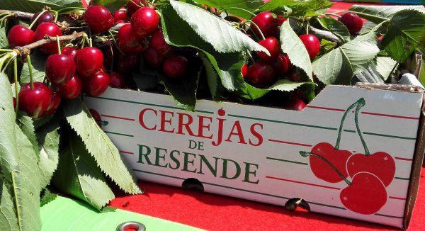 Festival da Cereja regressa a Resende este fim de semana