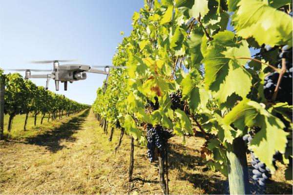 Tecnologias potenciadoras de uma maior produtividade nos pomares e vinhas
