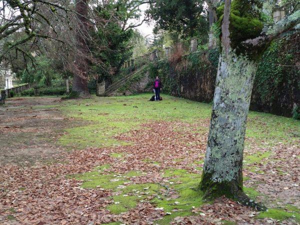Estudo revela a biodiversidade escondida nos espaços verdes urbanos