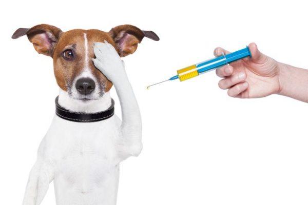 Marco inicia Vacinação Antirrábica