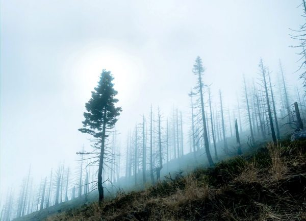 Detenção por incêndios florestais